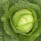 HCG Diet (P2/3) Cabbage Soup